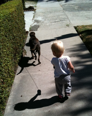 LO walks Sadie